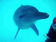 Delfinoterapia na Bali