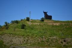 Býk a corrida, symbol Andalúzie