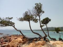 Dovolenka Korzika, pláž Palombaggia