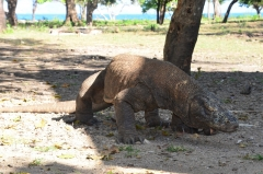 Komodský národný park, Indonézia