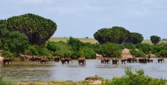 Slonie stáda, safari Keňa