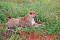 Safari na dovolenke v Keni