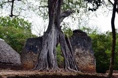 Dovolenka Keňa, výlet na ruiny mesta Gede
