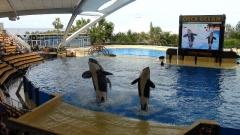 Loro park, Tenerife, show s kosatkami