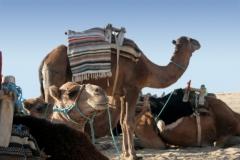 Dovolenka v Tunisku bez ťavy nie je možná