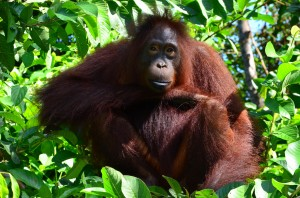 Dovolenka Indonézia - exotika, príroda a poznávanie